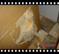 大朗白蚁防治:白蚁侵入仓库建筑造成巨