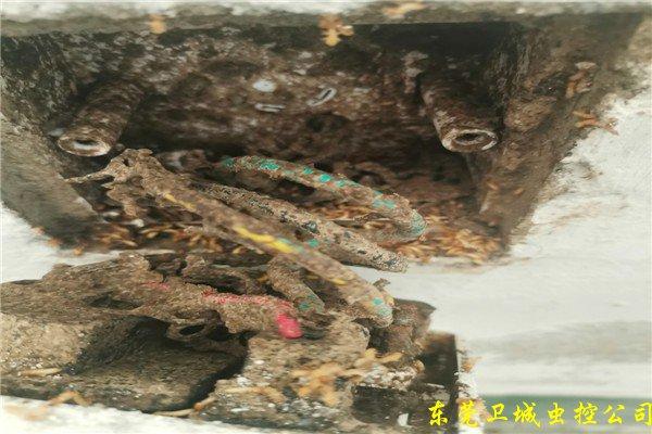 立项制订中国本人的农药-樟木头防治白蚁
